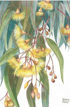 Australian Wildflowers, Australian Native Flowers, Australian Art, Botanical Drawings, Botanical Art, Botanical Illustration, Watercolor Print, Watercolor Flowers, Watercolor Paintings
