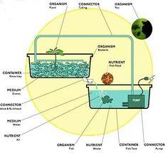 Aquaponics Diagram | 8 Best Aquaponics Diagrams Images On Pinterest Gardens Hydroponic