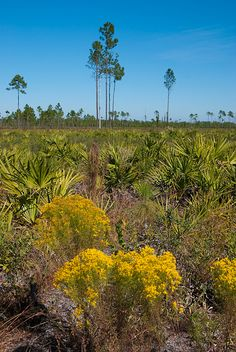 """The Florida Trail in Seminole State Forest is one of the wildest treks you can take near urban Orlando. It's featured in """"Five Star Trails Orlando"""""""