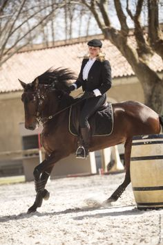 Working Equitation, french Lusitano Nilo des Frettes