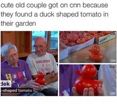 I want someone to look at me the way he looks at her Or the way she looks at the tomato