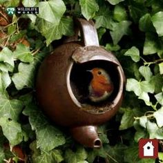 Ceramic hanging #teapot designed for #robins to nest. Very cute.