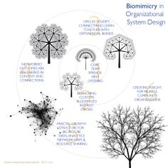 biomimicry in organizational design by Evo Heyning. @amoration
