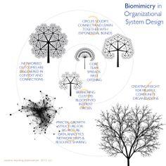 biomimicry in organizational design by Evo Heyning. @amoration