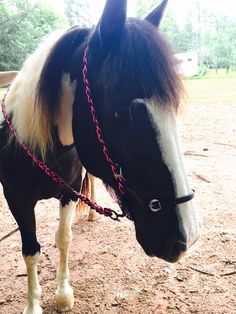 Easy DIY bridle for your horse! Check out how to make it now!