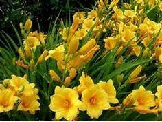 Flower Garden Ideas: Perennials You'll Love these flower all summer ...