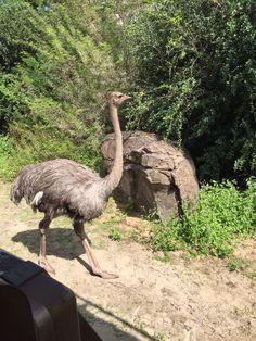 Disney Animal Kingdom, Camel, Bird, Disney, Projects, Photos, Animals, Log Projects, Blue Prints