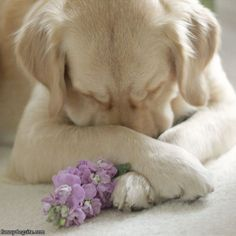 puppy prayer...
