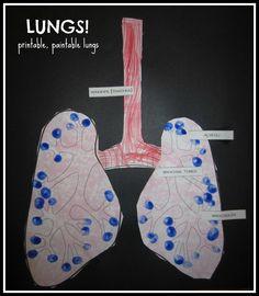 "Sponge-stamped Lungs ""Art"": Stop by Relentlessly Fun, Deceptively Educational for some printable, paintable lungs and a book recommendation to teach kids about why lungs are so important!"