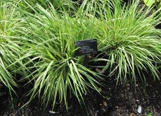 Herbs, Plants, Bingo, Gardens, Ideas, Decor, Decoration, Outdoor Gardens, Herb