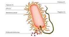 SEGURIDAD ALIMENTARIA, BROMATOLOGÍA y MICROBIOLOGÍA de los ALIMENTOS: septiembre 2016