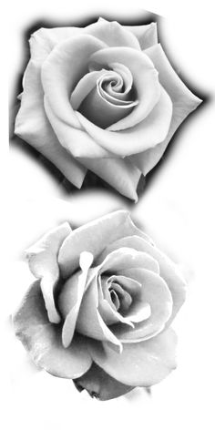 Tatoo Rose, Rose Drawing Tattoo, Realistic Rose Tattoo, Rose Flower Tattoos, Flower Tattoo Drawings, Flower Tattoo Foot, Flower Tattoo Shoulder, Flower Tattoo Designs, Watercolor Tattoos