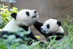 Bai Yun and Mr. Wu playing on Sunday afternoon | Xiao Liwu p… | Flickr