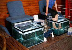 Fish spa installé et entretenu par #Aquarium Services France #fishspa #garrarufa #fishmassage #massagedespieds