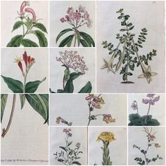 Large selection of antique botanicals to choose from. All botanicals are original lithographs dated late 1700's to early 1900's.  All reasonably priced from .88 cents to $14.88. Check out photos ! Located at Brass Armadilo Antique Mall, Booth 140, Dealer 556.