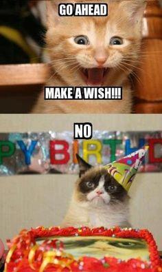 dcb86877343e101b21ab0bb8d8a3ba82 grumpy cat humor grumpy kitty happy birthday meme funny images collection grumpy cat birthday
