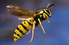 Mean Bugs: Who Gets Stung the Hardest? - WSJ