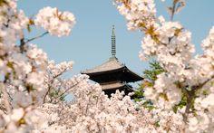 Japanese Temples - Ninnaji Temple