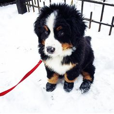 Puppy @puppystagrams I love my booties...Instagram photo | Websta (Webstagram)