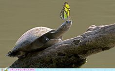 turtle and butterfly....sweet!