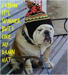 English Bulldog Humor #SidGraves