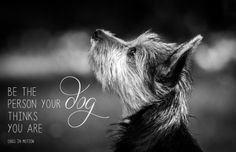 australian terrier  by www.dogsinmotion.at