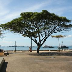 Zanzibar in Zanzibar Town, Mjini Magharibi