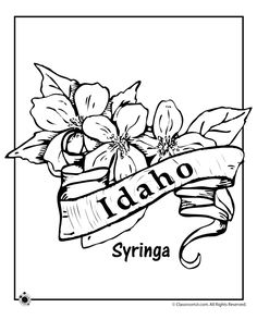 State Flower Coloring Pages Idaho State Flower Coloring Page – Classroom Jr.
