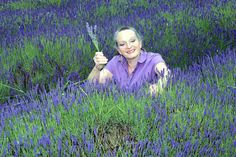Lavenders in bloom at Wellbank Farm. Joanna Spencer picking some Lavender