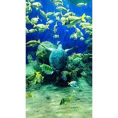 #lajolla #coronado #escondido #downtownsd #sandiegocounty #oceanside #ramona #pb #pacificbeach #ob #oceanbeach #carlsbad #lajollabeach #temecula #la #losangeles #orangecounty #oc #santamonica #coronado #hunntingtonbeach #bookstagram #booklover #booknerd #booknow #books #gaslamp #gaslampdistrictsd #lajollalocals #sandiegoconnection #sdlocals - posted by CJ  https://www.instagram.com/fyrpilotzwife. See more post on La Jolla at http://LaJollaLocals.com