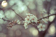 Let's spring