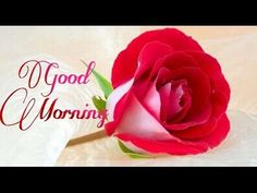 """Good Morning Wishes, Free Animated Ecards (Morning Video). Your search for Good Morning Ends Here. Wish your Dear ones anywhere in the world """"Good Morning"""" o. Good Morning Music, Good Morning Dear Friend, Good Morning Roses, Latest Good Morning, Good Morning Texts, Good Morning Happy, Good Morning Picture, Good Morning Messages, Good Morning Greetings"""