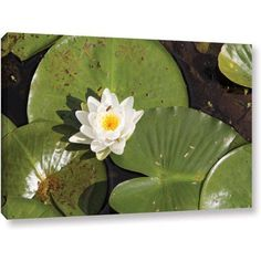 Cody York Lilly Pad Gallery-Wrapped Canvas, Size: 32 x 48, White