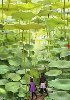 牙買加蕨類植物林