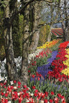 Tulip festival, Mount Vernon, Washington