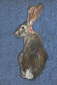 Hare by Celia Harvey