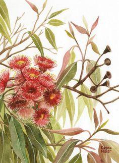 Australian Wildflowers, Australian Native Flowers, Australian Bush, Art Aquarelle, Watercolor Art, Australian Painting, Eucalyptus Leaves, Leaf Art, Native Art