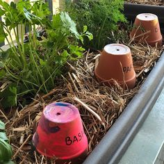 Today we created labels for our herb garden using the mini terracotta pots and acrylic paints from Primary School Curriculum, Create Labels, Australian Curriculum, Teacher Hacks, Terracotta Pots, Herb Garden, Herbs, Fun, Painting
