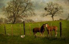 James Franco and My Little Ponies. © Susie Nishio