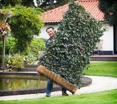 Ha borostyán panelt választunk kerítésnek, nemcsak védelmet biztosítunk ezzel magunknak és értékeinknek, hanem intimszféránkba sem engedünk ezentúl belátást az utcafront, vagy a szomszéd felől.  #zöldfalkert #borostyanfal #hederapanel #hedera #greenwall #kerteszet #borostyan #zoldfal #növény #térelválasztó #kert