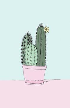 imagen de cactus floreciendo