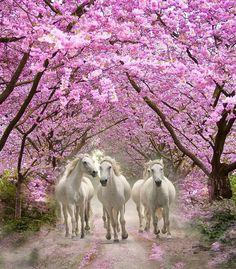 I like white horses