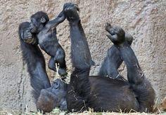 @pc3244 @selina22278 @Lisa Phillips-Barton King Wiseman PamsLove @kerstinnopens @vitali_giuseppe @relax_animals @Ann Flanigan Flanigan Murray @Tzadhiqua @Cathy Ma Ma Dozier Porter pic.twitter.com/erddFxrcee