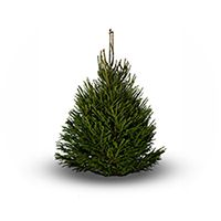 Santa is coming to Magical Marldon!! | Marldon Christmas Trees ...