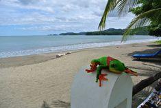 Javi the Frog at Bahia del Sol, Potrero beach, Guanacaste - http://www.govisitcostarica.com/travelInfo/photo-gallery.asp?tag=on-location