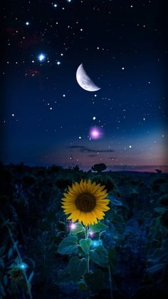 Starry Night wallpaper by - cb - Free on ZEDGE™ Cute Wallpaper Backgrounds, Pretty Wallpapers, Galaxy Wallpaper, Wallpaper Wallpapers, Iphone Wallpapers, Cellphone Wallpaper, Lockscreen Wallpaper Android, Sunset Wallpaper, Phone Backgrounds