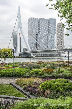 Eindhoven, Delft, Lonely Planet, Rotterdam, Bridges, Netherlands, Dutch, Skyscraper, Cities