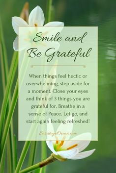 Heres a simple thing to do whenever you feel overwhelmed. Thinking about what you are grateful for can bring instant peace because it reminds you of the things you can be happy about. Focus on the good in your life, and let go of everything else. Affirmations Louise Hay, Positive Self Affirmations, Morning Affirmations, Grateful Quotes, Gratitude Quotes, Attitude Of Gratitude, Positive Thoughts, Positive Quotes, Happy Thoughts