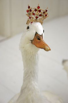 Im not really sure why this duck is wearing a crown, but I approve.