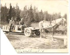 Finnish horse Agriculture, Finland, Retro Vintage, Dairy, Milk, Military, Horses, Sun, Times